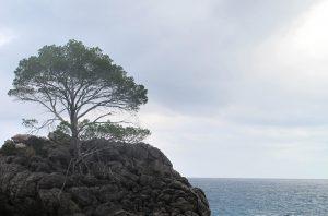 mindfulness als startpunt van transitie